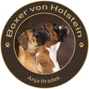 Boxerzucht|Boxer von Holstein|Schleswig-Holstein|Anja Hradek Logo